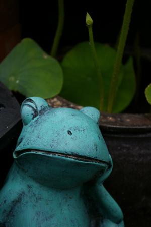 Frognlotus