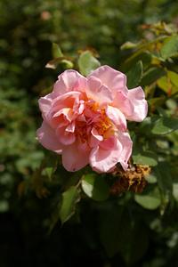 Pink09